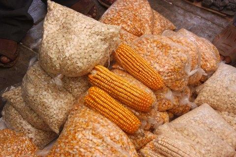 Maices criollos expuestos en los intercambios de semillas que se organizan en las comunidades mayas de Yucatán