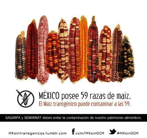masacre maíz