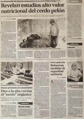 Periódico Patricia Cerdo Pelón Milenio