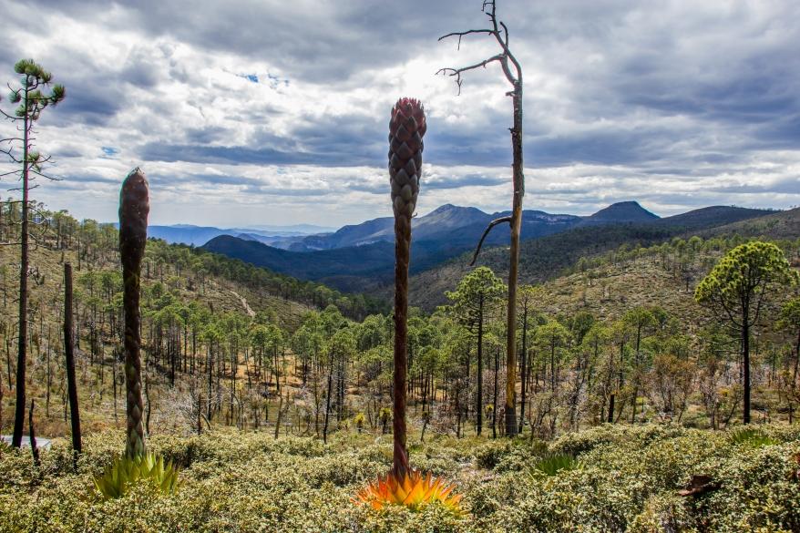 paisaje-sierra-madre-oriental-tamaulipas